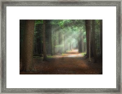 Walk In The Woods Framed Print by Bill Wakeley