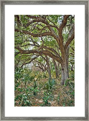 Walk In The Woods Framed Print by Patrick M Lynch
