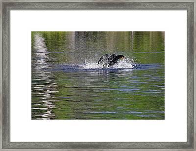Walk On Water - The Anhinga Framed Print by Christine Till