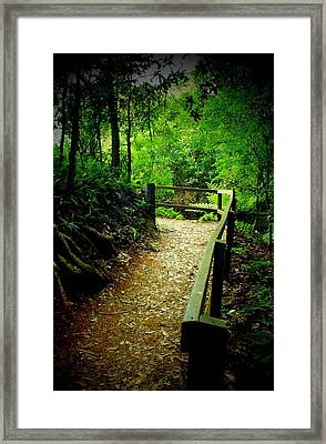 Walking Track Bunya Mountains National Park Qld Australia Framed Print by Sandra Sengstock-Miller