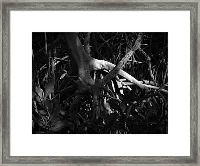 Walking Tree Number 1 Framed Print by Phil Penne