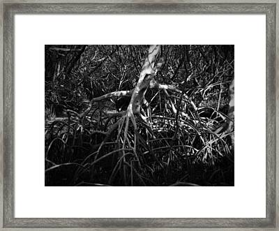 Walking Tree Number 2 Framed Print by Phil Penne