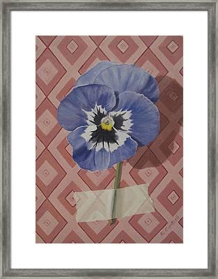 Wall Flower IIi Framed Print by Sheila Cantrell