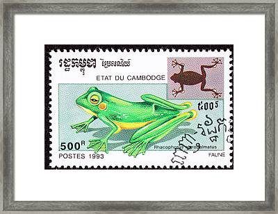 Wallace's Flying Frog Framed Print by Jim Pruitt