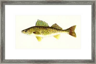 Walleye Framed Print by Michael Vigliotti