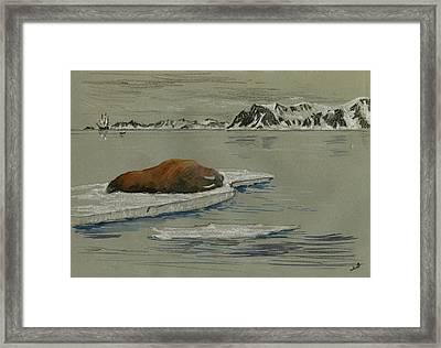 Walrus On The Iceberg Framed Print by Juan  Bosco