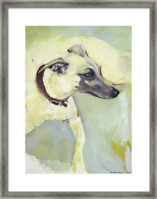 Walter Framed Print by Sally Muir