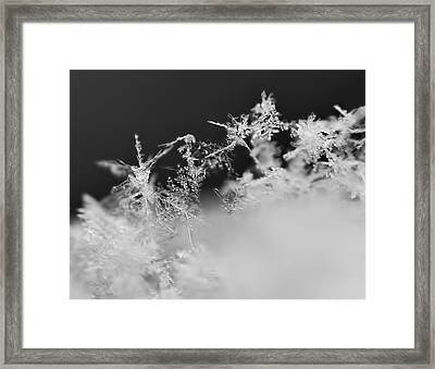 Waltz Of The Snowflakes Framed Print by Rona Black