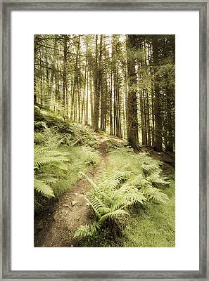 Wandering Framed Print by Denise McLaurin