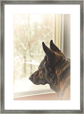 Wanting To Play Framed Print by Karol Livote