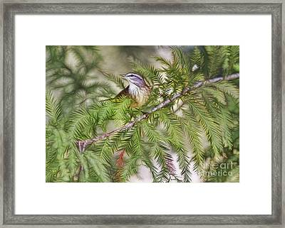 Warbler In The Cypress Framed Print by Deborah Benoit