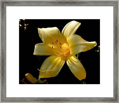 Warm Glow Framed Print by Rona Black