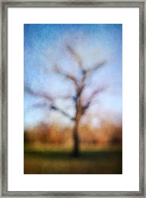 Warner Park Tree Framed Print by David Morel
