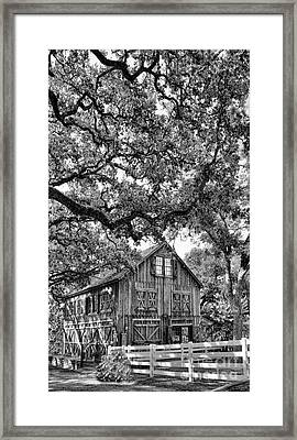 Was He Raised In A Barn? Framed Print by Delilah Downs