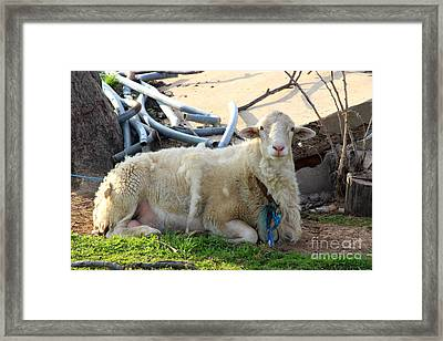 Was I Baaaad? Framed Print by Kathy  White