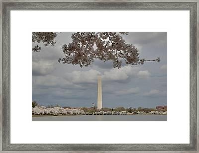 Washington Monument - Cherry Blossoms - Washington Dc - 011330 Framed Print by DC Photographer