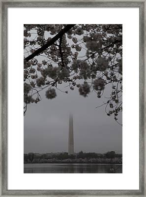 Washington Monument - Cherry Blossoms - Washington Dc - 011336 Framed Print by DC Photographer