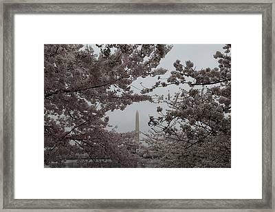 Washington Monument - Cherry Blossoms - Washington Dc - 011342 Framed Print by DC Photographer