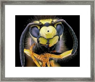 Wasp Head Framed Print by Nicolas Reusens