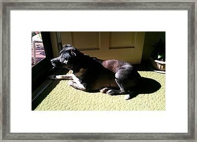Watchdog Framed Print by Kenny Glover