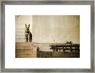 Watchdog Framed Print by Luciano Trevisan