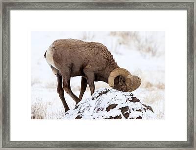 Watchful Eye Framed Print by Mike Dawson