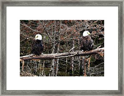 Watchful Eyes Framed Print by Elizabeth Winter