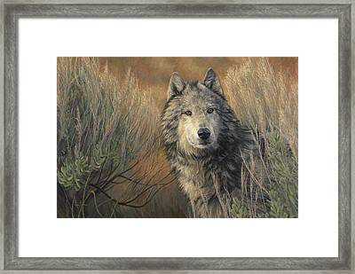 Watchful Framed Print by Lucie Bilodeau