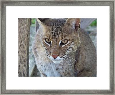Watchfull Eyes Framed Print by Jennifer  King