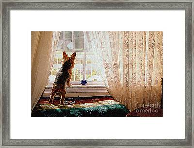 Watching For His Master Framed Print by Jak of Arts Photography