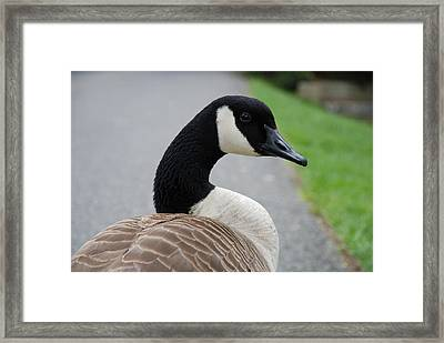 Watching Me Watching You Framed Print by Jennifer Ancker