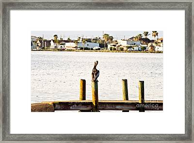 Watching Over The Bay Framed Print by Scott Pellegrin