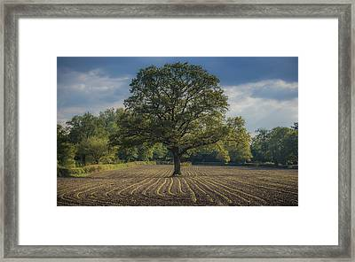 Watching Over The Newcomers Framed Print by Chris Fletcher