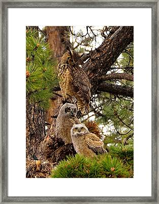 Watching Over You Framed Print by Tranquil Light  Photography