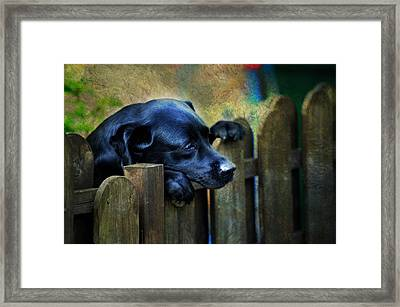 Watching The Life Passing By Framed Print by Jenny Rainbow