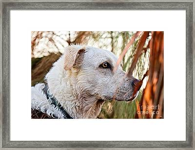 Watching The Skies Framed Print by Scott Pellegrin