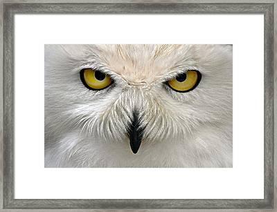Watching You Framed Print by Bev  Brown