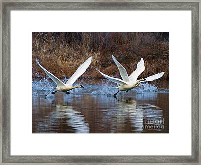 Water Dance Framed Print by Mike  Dawson