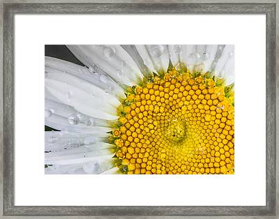 Water Dropped Daisy Framed Print by Dean Martin