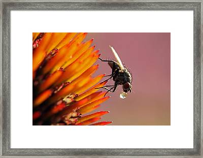 Water Drunk Framed Print by Juergen Roth