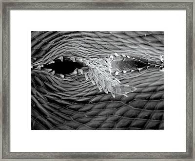 Water Flea Spina Framed Print by Petr Jan Juracka