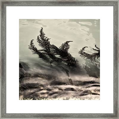 Water Fronds Framed Print by Dave Bowman