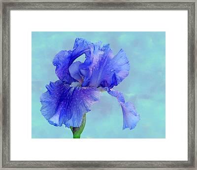 Water Iris Framed Print by Nikolyn McDonald
