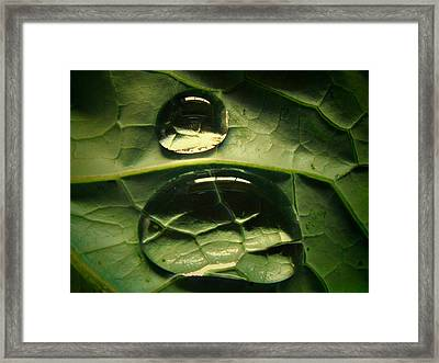 Water Life Framed Print by Diannah Lynch
