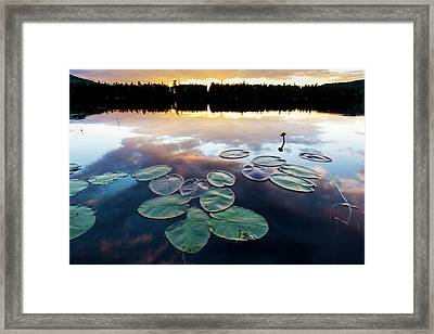 Water Lilies And Cloud Reflections Framed Print by Jerry and Marcy Monkman
