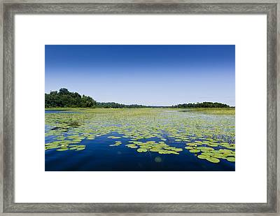 Water Lilies Framed Print by Gary Eason