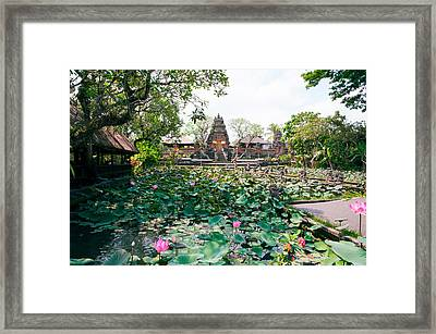 Water Lilies In A Pond At The Pura Framed Print by Panoramic Images