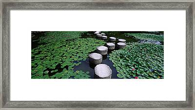 Water Lilies In A Pond, Helan Shrine Framed Print by Panoramic Images