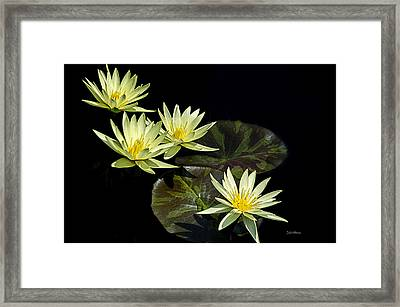 Water Lilies In Yellow Framed Print by Julie Palencia