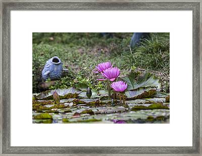 Water Lilly Trio Framed Print by Charles Warren
